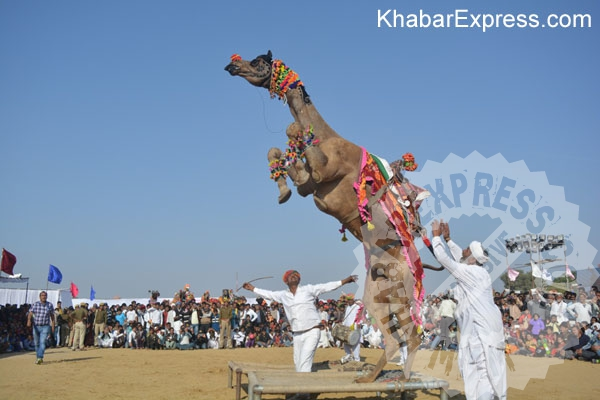 Bikaner added adventure in camel festival 2016