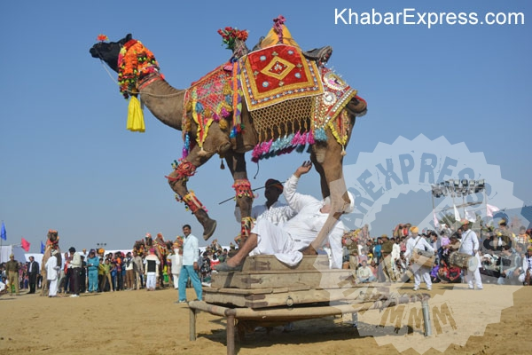 Camel Festival 2016 began in Bikaner