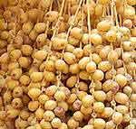 Bikaneri Special Khajoor (Date Fruit)