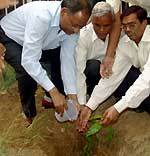 R K Chaunha GNMTD Bikaenr planting a tree at district telecomm head office