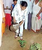 Bikaner DM Shreya Guha planting at Acharya Dharnidhar Mahadev Temple